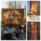 Harmony Ranch by Barbara Wyeth
