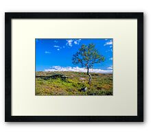 Landscape with a lonely tree Framed Print
