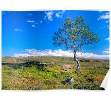 Landscape with a lonely tree Poster