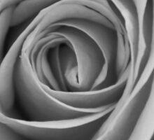 Noir Rose IV Sticker