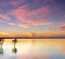 Four Trees - Wellington Point Qld Australia by Beth  Wode
