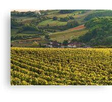 Vineyard in Burgundy Canvas Print