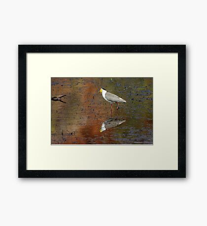 Masked Lapwing ~ Coloured By Nature Framed Print
