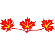Red Maple Leaves Canadian Standard Symbol Photographic Print
