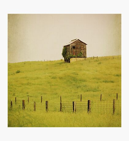 Summer Pastures Photographic Print