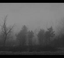 Trees... by DarkIndigo