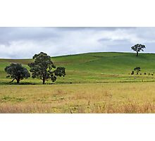 Simple Grasslands Photographic Print