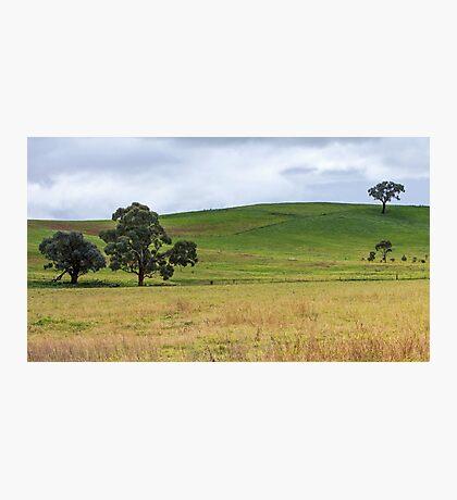 Simple Grasslands Photographic Print
