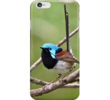 Variegated Fairy-wren iPhone Case/Skin
