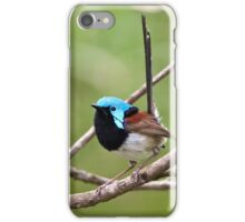 Variegated Fairy-wren iPhone Case/Skin