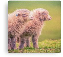Spring Lambs   (SW) Canvas Print