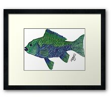 Green/Blue Fish Framed Print