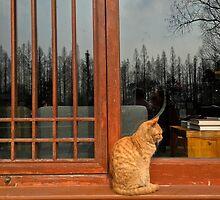 West Lake Cat, Hangzhou, China by Simone Maynard