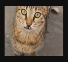 Eye Contact With A Stray Tabby Cat One Piece - Short Sleeve