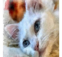 Van Cat - Pet Portrait Photographic Print
