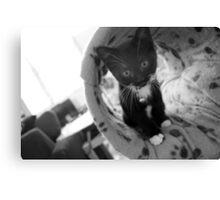 Kitty Kat Person Canvas Print