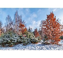 A diversity of winter Photographic Print