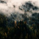 Forest In The Mist by Helmar Designs