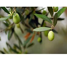 Olives On A Branch Photographic Print