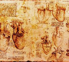 Heart And Its Blood Vessels, Leonardo Da Vinci Anatomy Drawings, Brown by BulganLumini