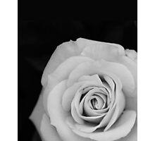 Noir Rose III Photographic Print