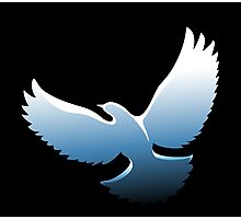 Flying Dove Photographic Print