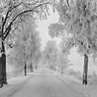 Frosty Winter Morning by Veikko  Suikkanen