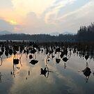 West Lake, Hangzhou, China by Simone Maynard