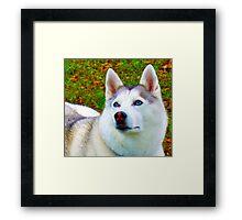 Snow Dog Love Framed Print