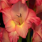 Gladiolus by Annlynn Ward