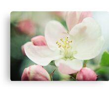 Pastel Blossoms Canvas Print