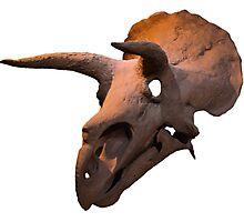 Triceratops dinosaur skull Photographic Print