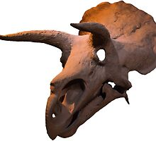 Triceratops dinosaur skull by pangolily