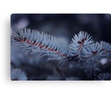 Tree spikes macro photograph, nature Canvas Print