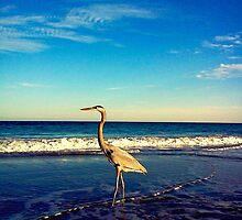 Great Blue Heron by AndromedaGalaxy