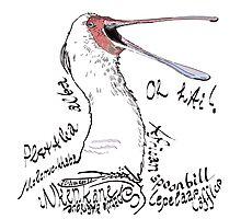 African spoonbill, Lepelaar Photographic Print