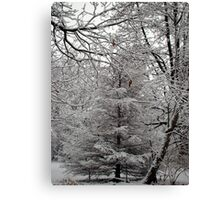 Snow Tree Canvas Print