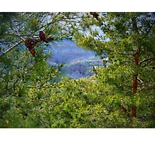 The blossoming pine on Christmas Photographic Print