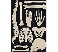 Osteology Photographic Print