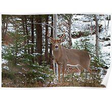 Bullet - White-tailed deer Poster