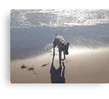 Cold water with my ball Canvas Print