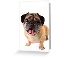 Pug have no nose Greeting Card