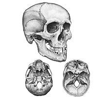 Skull multi view Photographic Print