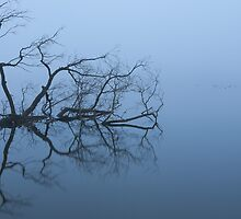 Branches In A Foggy Lake by photographyk