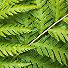 Fern Pattern by Colleen Farrell