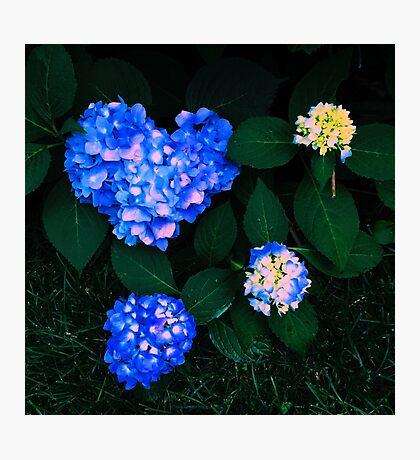 Love Nature Photographic Print
