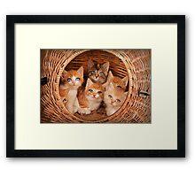 Sweet Kittens Framed Print