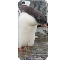 "Gentoo Penguin chick ~ ""Practise Makes Perfect"" iPhone Case/Skin"