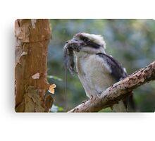 Kookaburra World Canvas Print