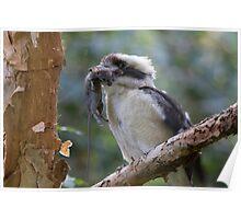 Kookaburra World Poster